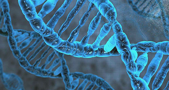 When testing an organism such as a human, tests become extremely complex due to our countless genes as well as the